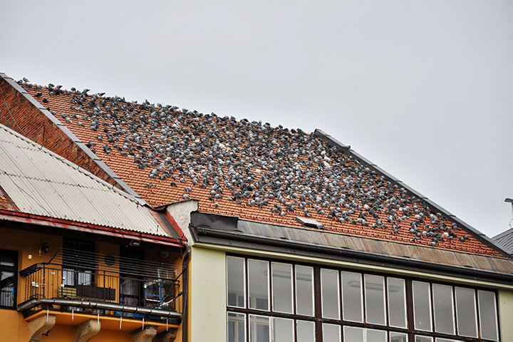 A2B Pest Control are able to install spikes to deter birds from roofs in Barnet.