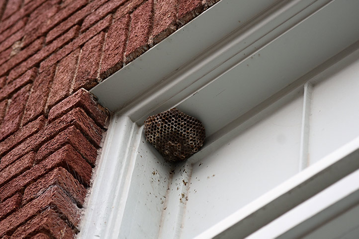 We provide a wasp nest removal service for domestic and commercial properties in Barnet.